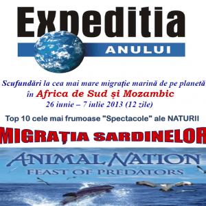 fata-sardine